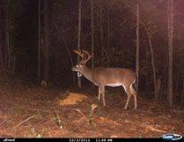 deer-03
