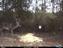 deer-05
