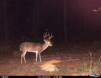 deer-08